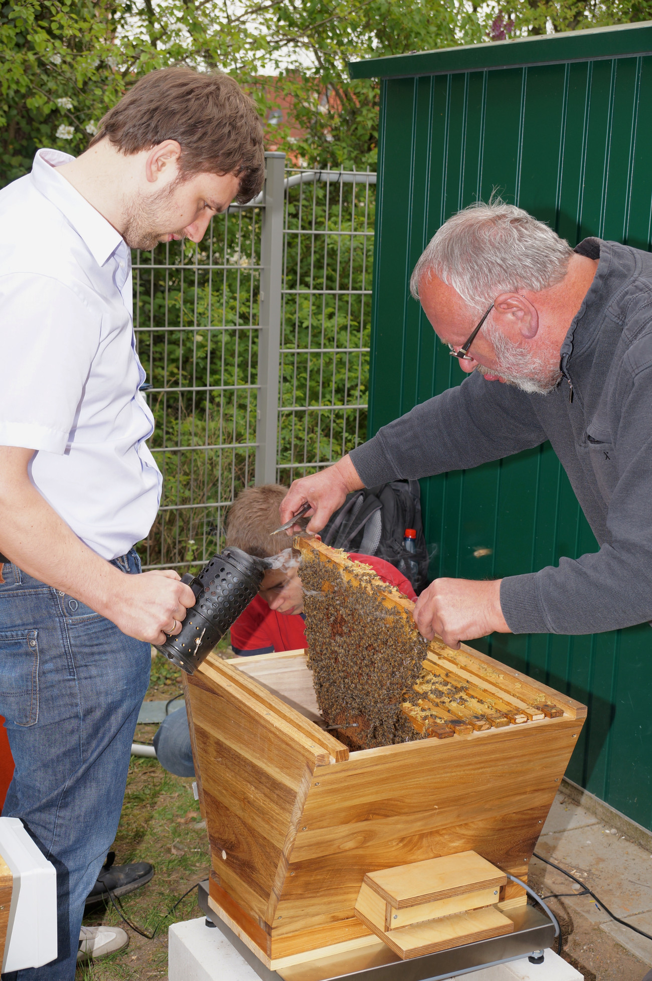 Einsetzen von Bienen