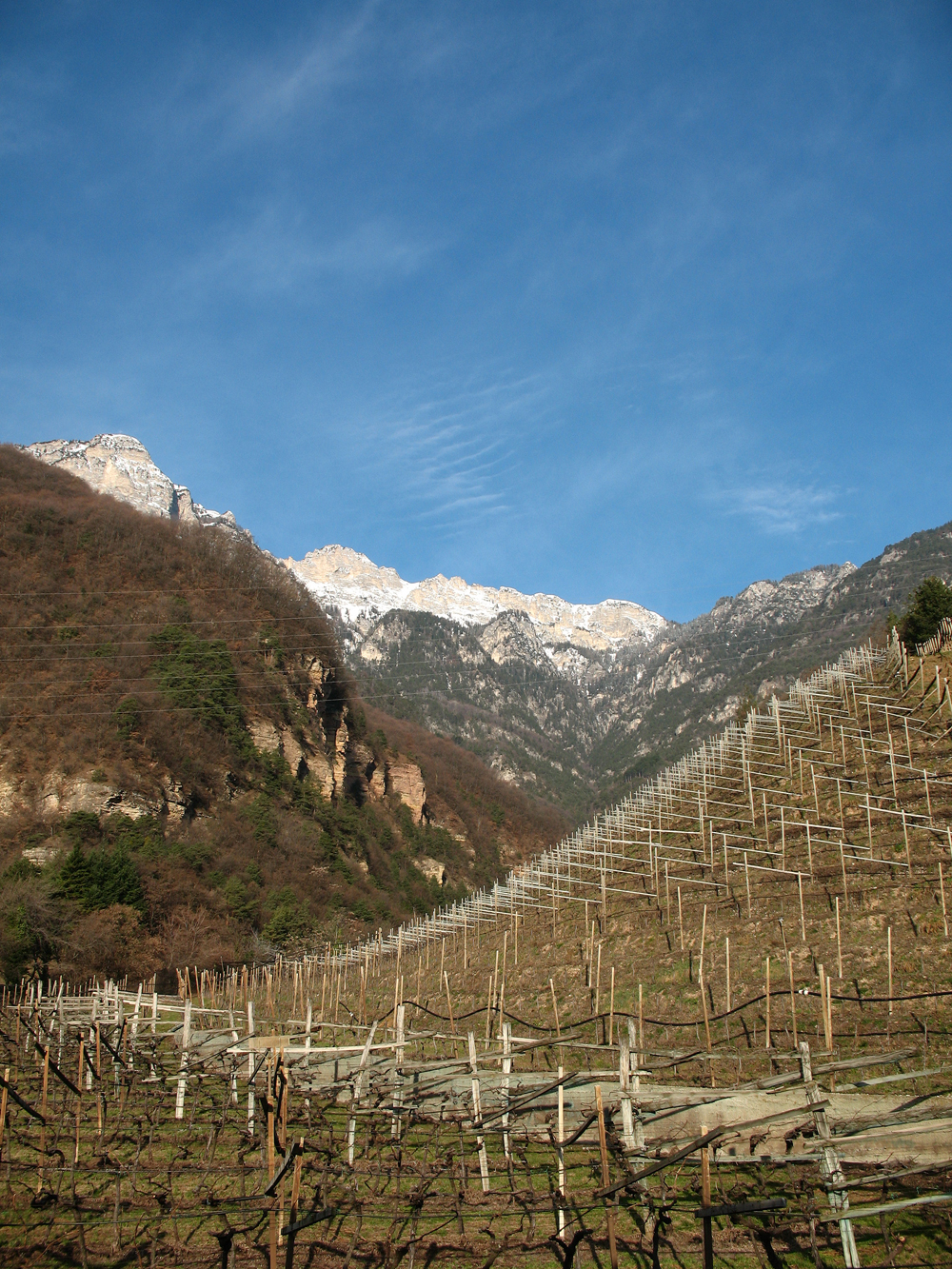 Weinbau in Südtirol